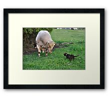 Whos the Boss Framed Print
