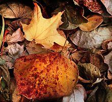 Fall Palette by Nadya Johnson