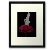 Rose on Ice Framed Print