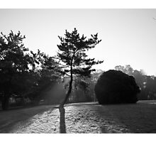Dancing in the Sun Photographic Print