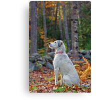 Emma - My Friend & Companion Canvas Print