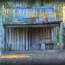 The Shed at Nurragingy by Staffaholic