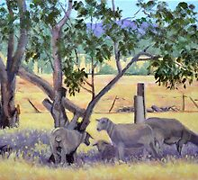 """Sheep in Shadow"" by Brenda Matson"
