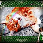 Irish Meows by Kristie Theobald