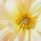 Yellow Dahlia Greeting Card by Mariola Szeliga