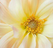 Yellow Dahlia Greeting Card by Mariola Szeliga