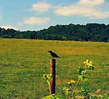 Bird on the fence by Scott Mitchell