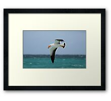 Pacific Gull and Surf Crab Framed Print