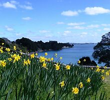 Daffodils at Beachlands, New Zealand by Melissa Stevenson