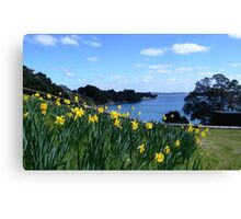 Daffodils at Beachlands, New Zealand Canvas Print