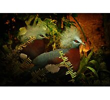 Two Victoria Crowned Pigeons in mystery forest Photographic Print