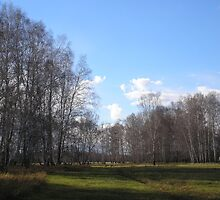 Birch grove by Yuri Zolotaryov