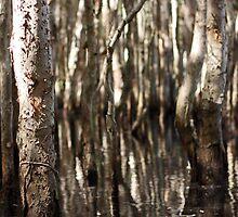 Redhead Lagoon by Timothy John Keegan