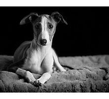 Louis Photographic Print