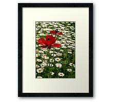 Spring 2013-3 Framed Print