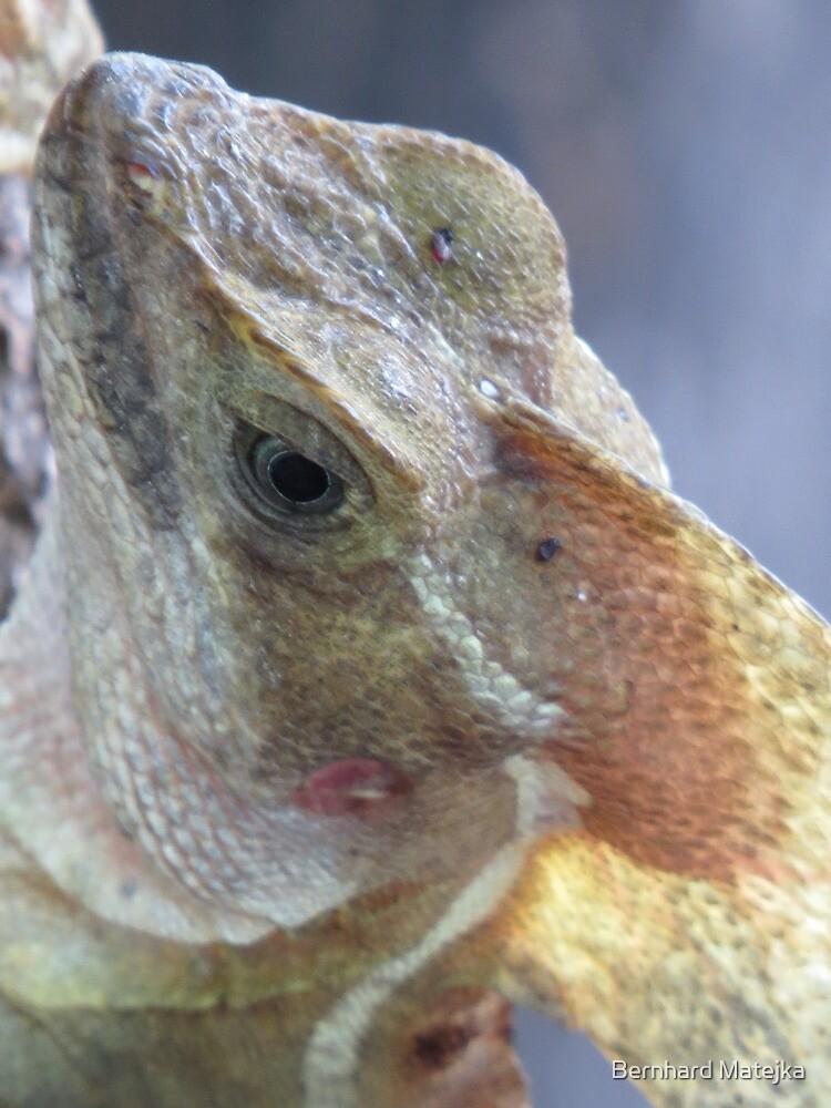 portrait of a saurian - retrato de un lagarto by Bernhard Matejka