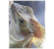 portrait of a saurian - retrato de un lagarto Poster