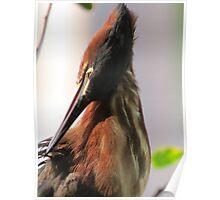 portrait of a bird - retrato de un ave Poster