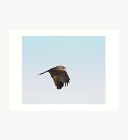 Black Kite Art Print