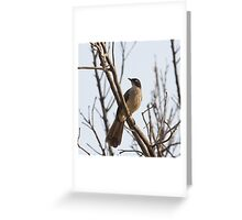 Black-cap Babbler Greeting Card