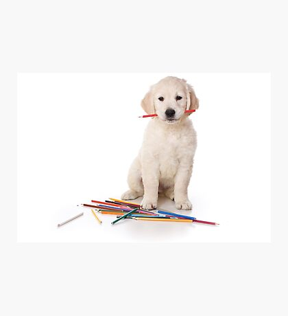 Fluffy Puppy golden retriever Photographic Print