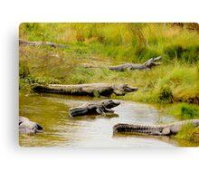 Alligator Meeting Canvas Print