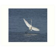 Great White Egret at Tendaba Art Print