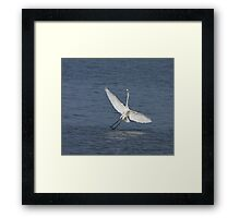 Great White Egret at Tendaba Framed Print