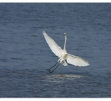 Great White Egret at Tendaba Photographic Print