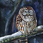 Tawny Owl - cold winter by Redilion