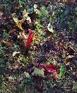 Autumn Symphony by RC deWinter
