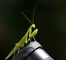 Praying Mantis by Sue Robinson