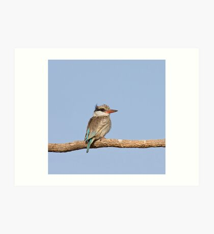 Striped Kingfisher in The Gambia Art Print