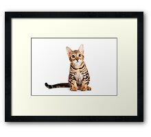 Striped red kitten Bengal cat Framed Print