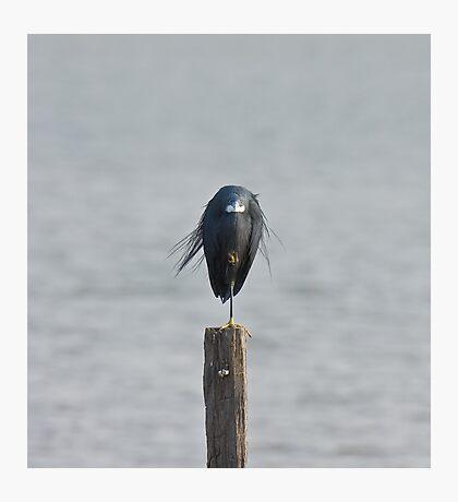 Western Reef Heron on one leg Photographic Print