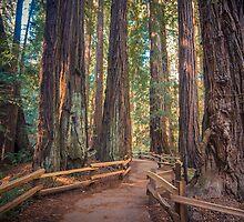 Muir Woods by Raj Golawar