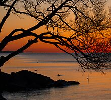 Colorful Quiet Sunrise on Lake Ontario in Toronto, Canada  by Georgia Mizuleva