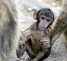 Playing baby monkey by Mercedeshall