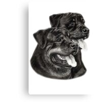 Rottweilers Canvas Print