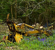 Woodland and Machine by Sue Robinson