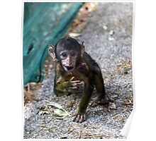 Baby Monkey on Gibraltar Poster
