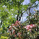 North Carolina Seasons by Tibby Steedly