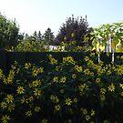Yellow everywhere! by Doreen Gilbert
