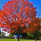 Autumn in the park by Artophobe