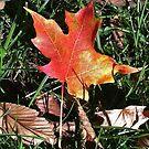 Autumn Beauty by Artophobe
