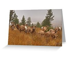Columbia Rams Greeting Card