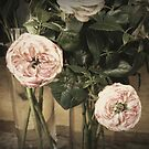 """Antiqued"" Roses by Barbara Wyeth"