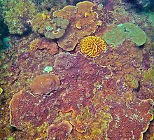 COMPETITION CORAL by NICK COBURN PHILLIPS
