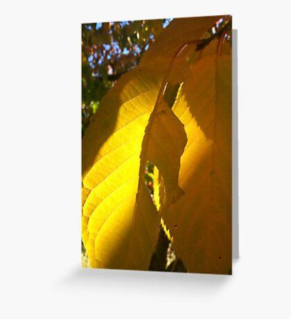 Autumn cherry tree Greeting Card