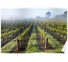 Vine Lines Poster